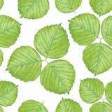 Naadloos patroon met groene bladeren 1 Stock Afbeelding