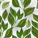 Naadloos patroon met groene theebladen Stock Fotografie