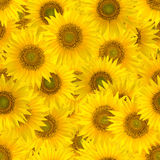 Naadloos patroon met grote heldere zonnebloemen royalty-vrije stock foto