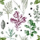 Naadloos patroon met hand getrokken kruiden en kruiden Royalty-vrije Stock Afbeeldingen