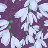 Naadloos patroon met het bloeien sneeuwklokjes en bladeren royalty-vrije illustratie