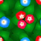 Naadloos patroon met ipomoeabloemen Stock Afbeelding