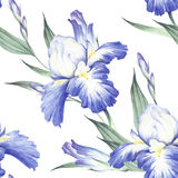 Naadloos patroon met iris De hand trekt waterverfillustratie Stock Afbeeldingen