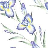 Naadloos patroon met iris De hand trekt waterverfillustratie Royalty-vrije Stock Afbeelding