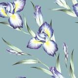 Naadloos patroon met iris De hand trekt waterverfillustratie Stock Foto