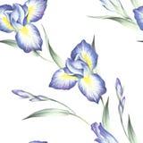 Naadloos patroon met iris De hand trekt waterverfillustratie Royalty-vrije Stock Foto