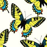 Naadloos patroon met kleurrijke machaonvlinders Stock Foto's