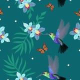 Naadloos patroon met kolibries, orchidee?n, palmbladen, monarchvlinders De vectorillustratie, kan als druk voor worden gebruikt vector illustratie