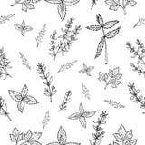 Naadloos patroon met kruiden Stock Afbeeldingen