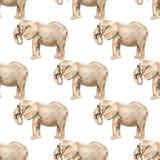 Naadloos patroon met olifant stock illustratie