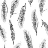 Naadloos patroon met oren van tarwe Zwart-witte kleur Bakkerijschets Uitstekende vectorhand getrokken graverende illustratie zwar Stock Afbeeldingen