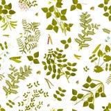 Naadloos patroon met peulvruchteninstallaties en zijn bladeren, peulen en bloemen royalty-vrije illustratie
