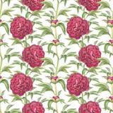 Naadloos patroon met pioenbloemen Stock Foto