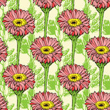 Naadloos patroon met roze gerberabloemen Stock Afbeeldingen