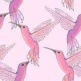 Naadloos patroon met roze kolibries vector illustratie