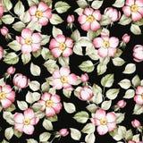 Naadloos patroon met rozebottel De hand trekt waterverfillustratie Royalty-vrije Stock Foto