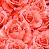 Naadloos patroon met rozen Vector illustratie Royalty-vrije Stock Fotografie