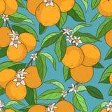 Naadloos patroon met sinaasappelen Stock Foto's