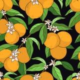 Naadloos patroon met sinaasappelen Stock Afbeeldingen