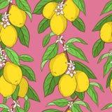 Naadloos patroon met sinaasappelen Stock Fotografie