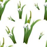 Naadloos patroon met sneeuwklokjesbloemen met groene stammen en bladeren verschillende grootte Witte achtergrond Vector illustrat Royalty-vrije Stock Fotografie