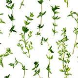 Naadloos patroon met takken van thyme Stock Fotografie