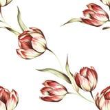 Naadloos patroon met tulpen De hand trekt waterverfillustratie Royalty-vrije Stock Foto