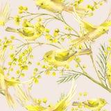 Naadloos Patroon met Twijg van Mimosa, Gele Vogel Stock Afbeelding