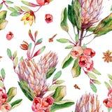 Naadloos patroon met waterverf roze protea en rozen Stock Afbeeldingen