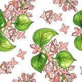 Naadloos patroon met waterverfbloemen Vector Getrokken hand vector illustratie