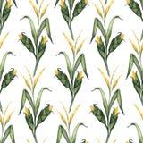 Naadloos patroon met waterverfillustraties van graanstelen vector illustratie