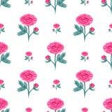 Naadloos patroon met waterverfpioen Vectorillustratie met roze bloemen Bloemenachtergrond voor Web-pagina, huwelijksuitnodigingen Stock Afbeeldingen