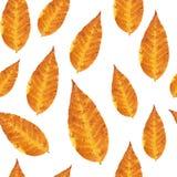 Naadloos patroon - oranje bladeren Royalty-vrije Stock Foto