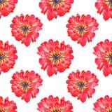 Naadloos patroon Textuur voor druk, stof, textiel, behang Rode badstoftulp Hand getrokken waterverfillustratie ge?soleerde vector illustratie