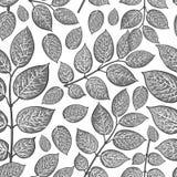 Naadloos patroon van berk, kamperfoelie grijze bladeren royalty-vrije illustratie
