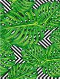 Naadloos patroon van bladerenmonstera Royalty-vrije Stock Afbeeldingen
