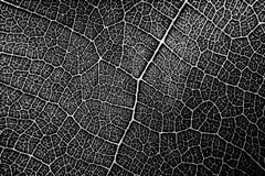 Naadloos patroon van bladtextuur in zwart-wit vector illustratie