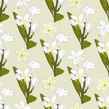 Naadloos patroon van bloemenplumeria Tropische Bloemen royalty-vrije illustratie