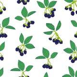Naadloos patroon van braambes of framboos Bessenachtergrond voor textiel, behang, reeksen tekeningen, dekking, oppervlakte vector illustratie