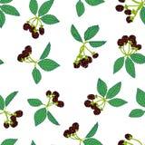Naadloos patroon van braambes of framboos Bessenachtergrond voor textiel, behang, reeksen tekeningen, dekking, oppervlakte royalty-vrije illustratie
