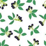 Naadloos patroon van braambes of framboos Bessenachtergrond voor textiel, behang, reeksen tekeningen, dekking, oppervlakte stock illustratie