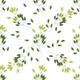 Naadloos patroon van de varen verschillende boom van de Eucalyptuspalm, gebladerte natuurlijke takken, groene bladeren, kruiden,  vector illustratie