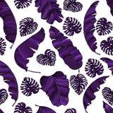Naadloos patroon van exotische purpere die banaanbladeren en monsterabladeren op transparante achtergrond worden geïsoleerd Decor vector illustratie
