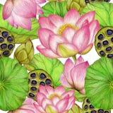 Naadloos patroon van hand getrokken lotusbloem stock illustratie