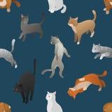 Naadloos patroon van isometrische beeldverhaalkatten Royalty-vrije Stock Foto