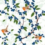 Naadloos patroon van Sleedoornbessen en de vogels van Robin Royalty-vrije Stock Foto's