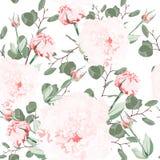 Naadloos patroon van vector roze eustoma en de eucalyptus van de waterverfstijl Illustratie van bloemen stock illustratie