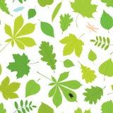 Naadloos patroon van verschillende boombladeren en insecten Stock Fotografie