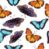 Naadloos patroon van vlinder Stock Afbeelding