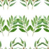 Naadloos patroon van waterverfeucalyptus, varen en baai op witte achtergrond royalty-vrije illustratie